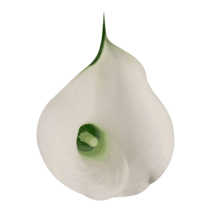 Mini-Calla---White-02